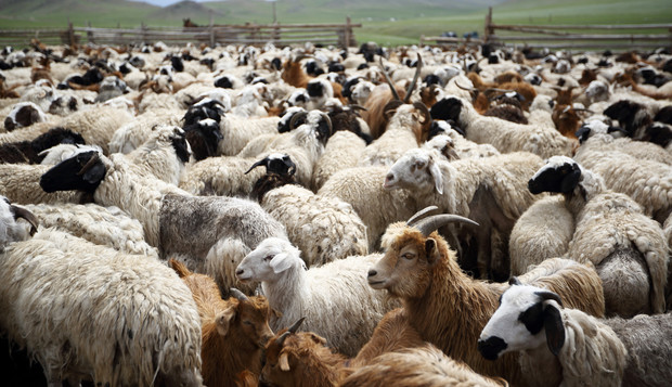 Image result for sheep and the goats